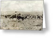 Texas: Cowboy, C1908 Greeting Card