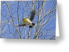 The American Goldfinch In-flight, Greeting Card
