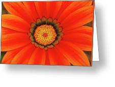 The Beauty Of Orange Greeting Card