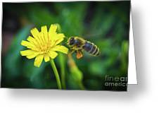 The Bee Greeting Card