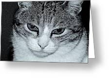 The Cat's Innocense Greeting Card