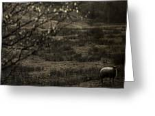 The Countryside Greeting Card