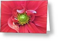 The Dahlia Greeting Card