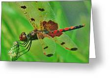 The Dragonfly Greeting Card