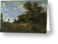 The Edge Of The Woods At Monts-girard, Fontainebleau Forest Greeting Card