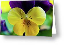The Face Of A Pansy Greeting Card
