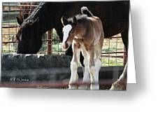 The Flying Colt With The Big White Feet Greeting Card