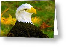 The Great Bald Eagle Greeting Card