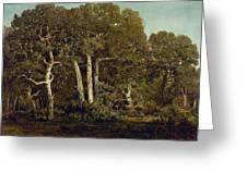 The Great Oaks Of Old Bas-breau Greeting Card