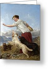 The Highland Lassie Greeting Card