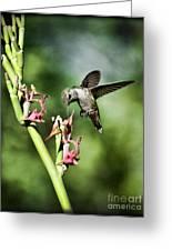 The Hummingbird  Greeting Card