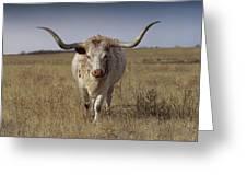 The Longhorn Greeting Card