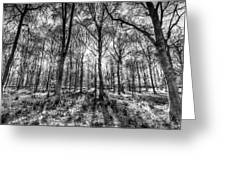 The Monochrome Forest Greeting Card