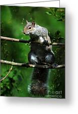 The Squirrel From Fairyland Greeting Card