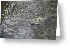 The Swimming Turtle Greeting Card