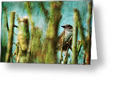 The Thrush Greeting Card