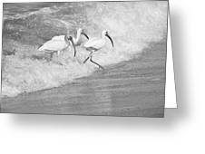 The Tide Of The Ibises Greeting Card