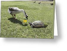 The Turtle And The Goose Greeting Card