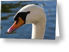 The Watchful Swan Greeting Card