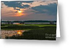 Thriving Beauty Of The Lowcountry Greeting Card