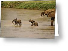 Tiny Elephants Greeting Card