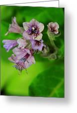 Tiny Purple Flower Greeting Card