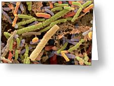 Toddlers Feces With Bifidobacteria, Sem Greeting Card