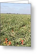 Tomato Field, California Greeting Card
