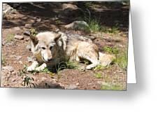 Tour Of Rocky Mountain Wildlife Foundation Greeting Card