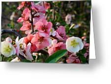 Toyo-nishiki Quince Greeting Card