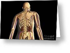 Transparent View Of Human Body Showing Greeting Card