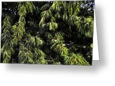 Tree 8 Greeting Card