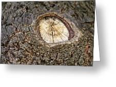 Tree Bark 2 Greeting Card