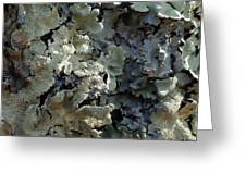 Tree Bark With Lichen Greeting Card