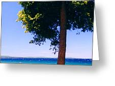 Tree By The Lake 3 Greeting Card