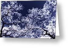 Tree Fantasy 17 Greeting Card