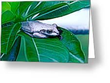 Tree Frog On Desert Rose  Greeting Card
