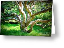 Tree In Golden Gate Park Greeting Card