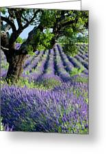 Tree In Lavender Greeting Card