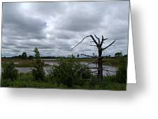 Tree In The Wetland Greeting Card