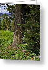 Tree In Vail Greeting Card
