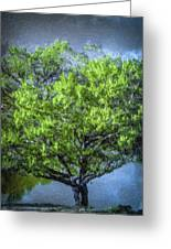 Tree On The Bank Greeting Card