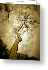 Tree Top In The Clouds Greeting Card