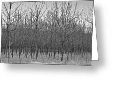 Trees In A Row Greeting Card