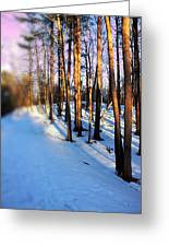 Trees Photography Greeting Card by Mark Ashkenazi