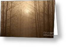 Trees Silhouetted In Fog Greeting Card
