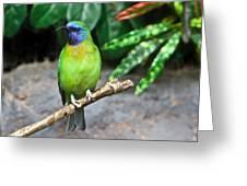 Tropical Bird Greeting Card