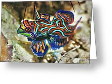 Tropical Fish Mandarinfish Greeting Card