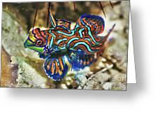 Tropical Fish Mandarinfish Greeting Card by MotHaiBaPhoto Prints