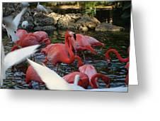 Tropical Sanctuary Greeting Card